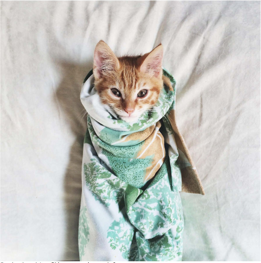 Cele mai frumoase poze cu pisici - Poza 10