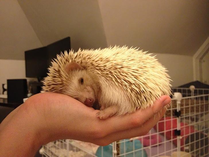 Cele mai simpatice animale lenese, in poze adorabile - Poza 3
