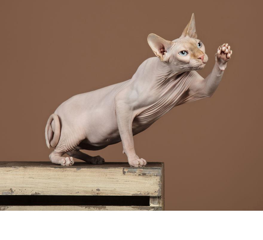 Cele mai frumoase pisici, intr-un pictorial atipic - Poza 10