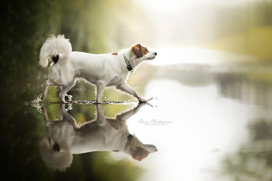 Bucuria sufletului frumos de caine, in poze superbe - Poza 13