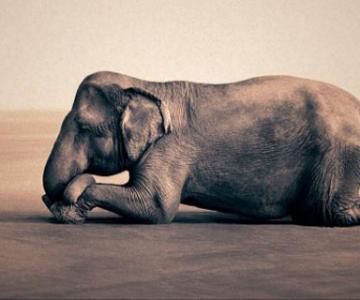 Copii, animale si iubire, de Gregory Snow