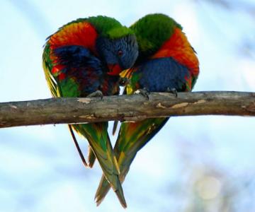 Dragostea pluteste in aer: Tandrete in lumea animala