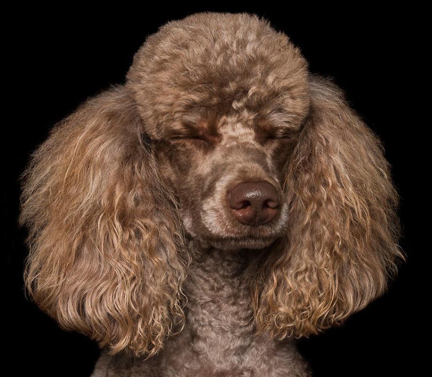 Cainii zen: Rasa canina, intre beatitudine si extaz - Poza 8