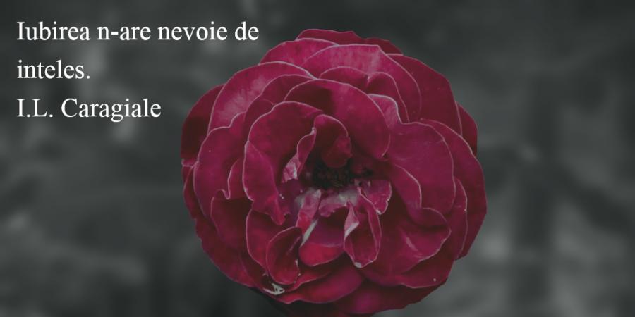 Citate superbe despre dragoste care iti vor umple inima cu bucurie - Poza 14