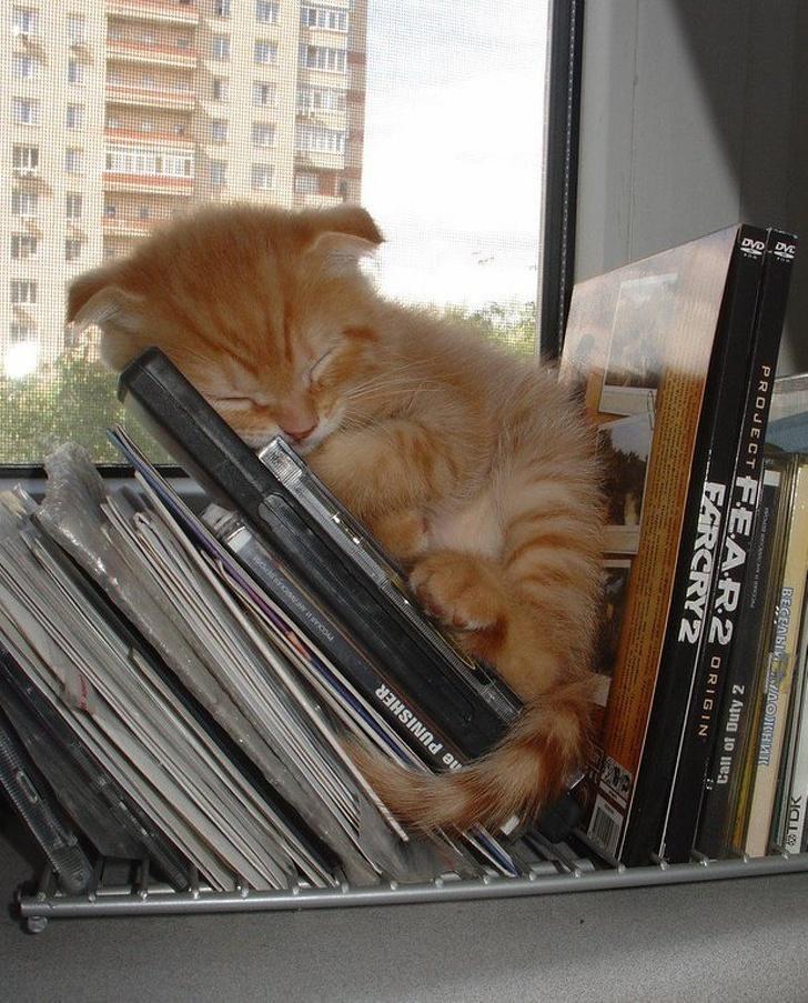 20+ Pisici adorabile si somnul lor nefiresc - Poza 12