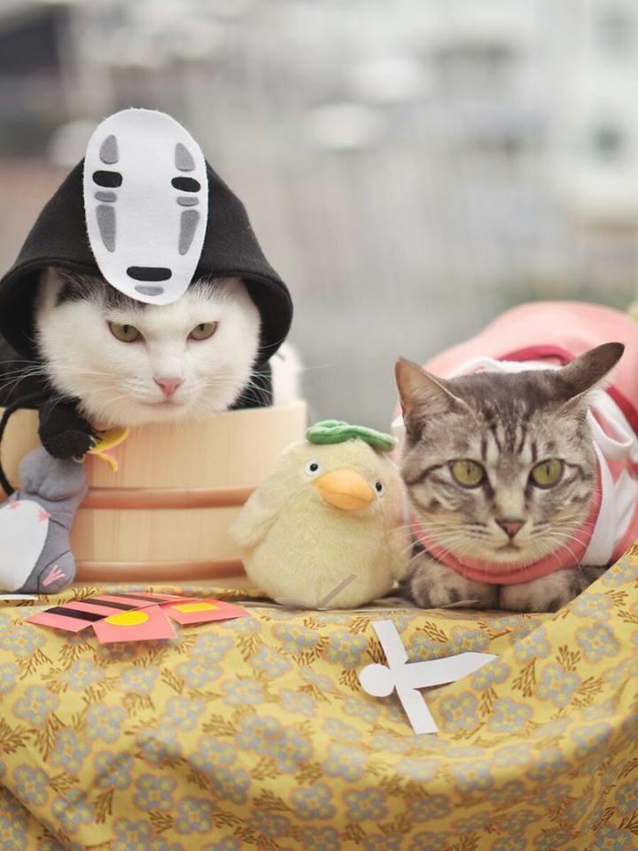 20+ Pisici costumate de Halloween, in poze hilare - Poza 12