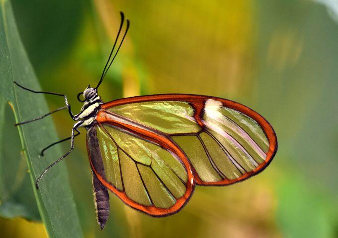 Cei mai frumosi fluturi din lume, in poze spectaculoase - Poza 3