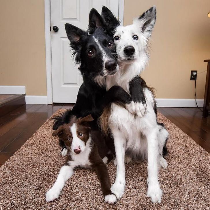 Cele mai prietenoase animale, in imagini induiosatoare - Poza 3