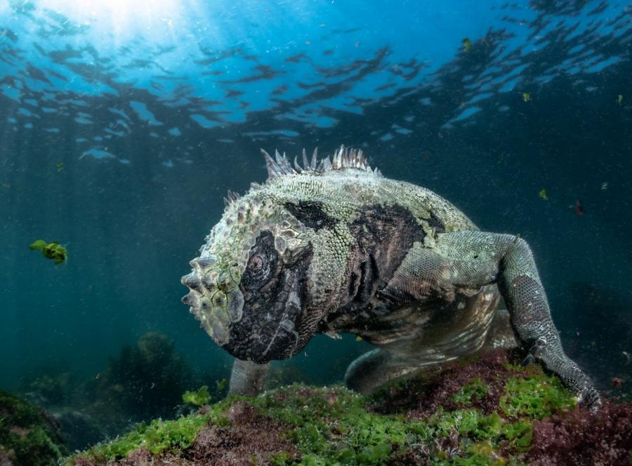 BigPicture Photo Contest: Fotografii spectaculoase din natura - Poza 9