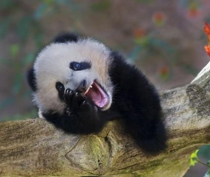 Animale cu simtul umorului, in cele mai haioase poze - Poza 15