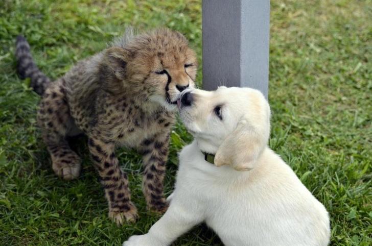 Cele mai prietenoase animale, in imagini induiosatoare - Poza 9