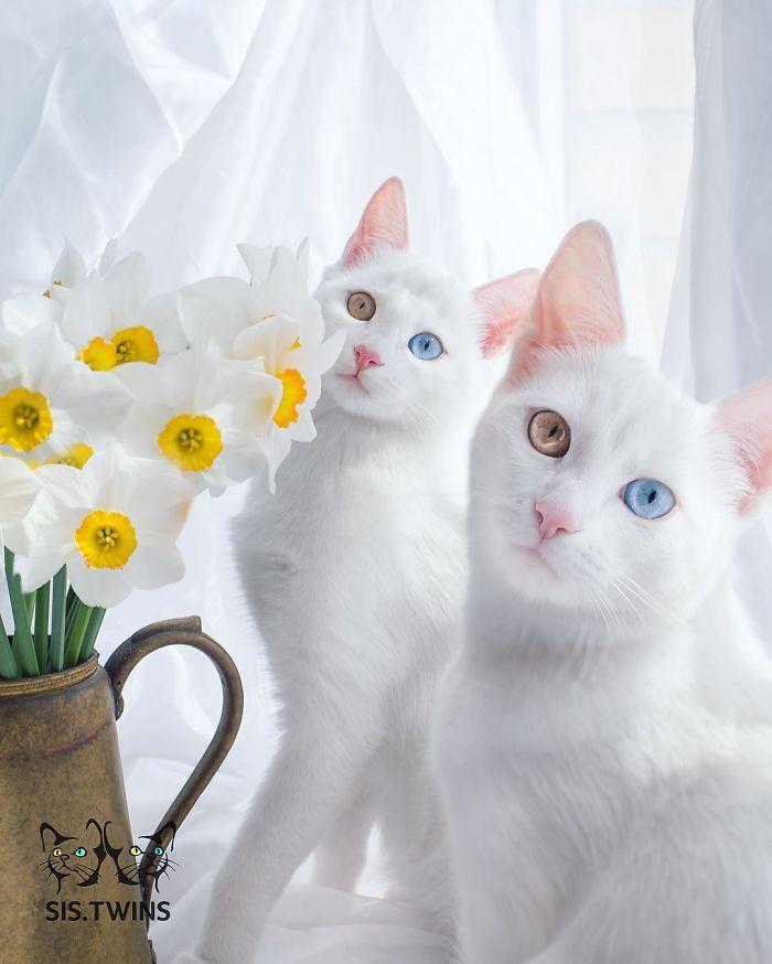 10+ Pisici superbe, in poze de colectie - Poza 7