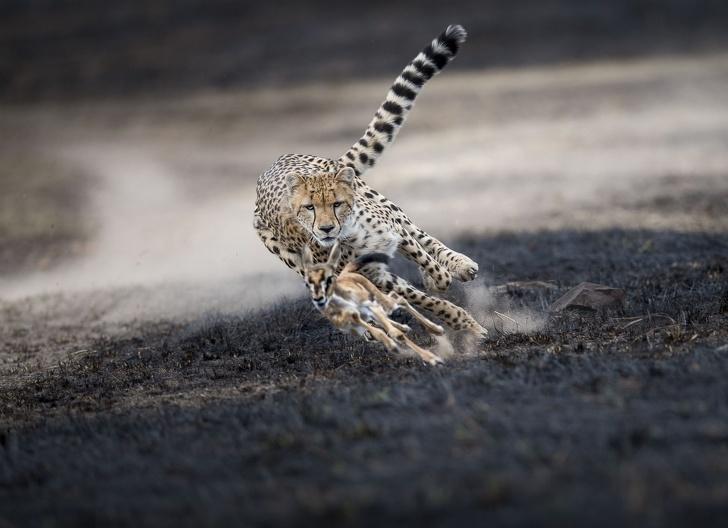 National Geographic: Cele mai bune poze ale anului 2018 - Poza 7