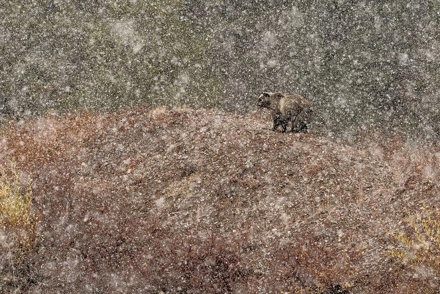 Cele mai bune fotografii cu si despre natura din 2019 - Poza 12
