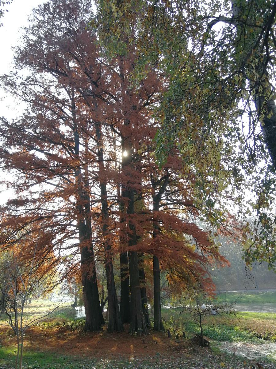 Parcul Nicolae Romanescu: Minunea verde din Banie, in poze superbe - Poza 8