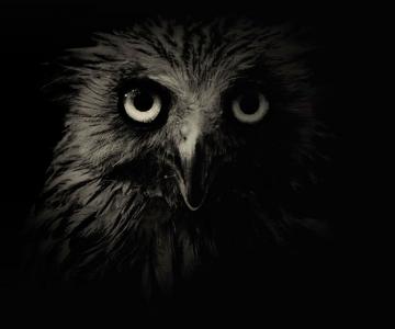 Portrete misterioase in alb-negru, cu animalele de la zoo