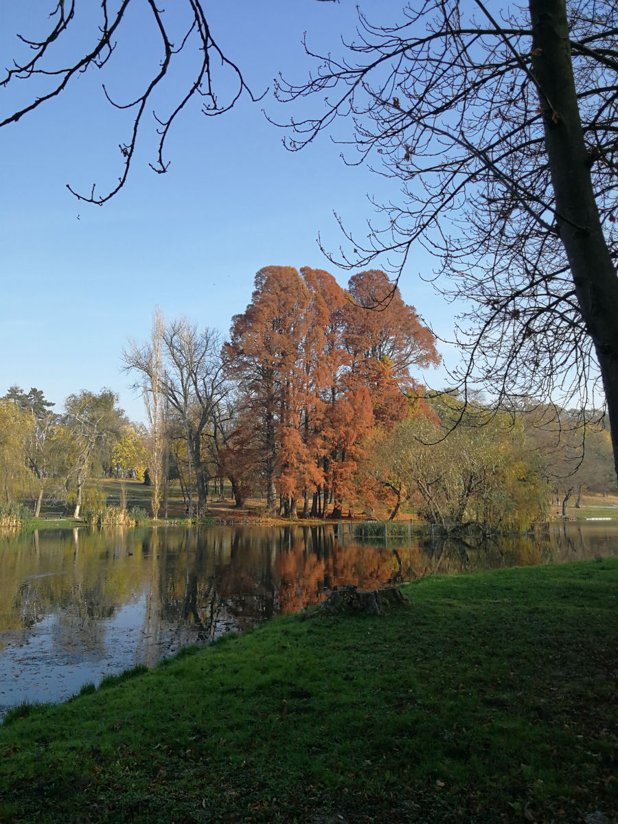 Parcul Nicolae Romanescu: Minunea verde din Banie, in poze superbe - Poza 21