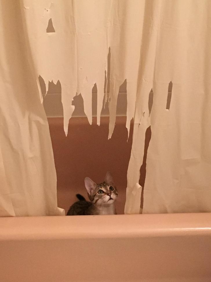 Pisici puse pe rele, in poze haioase - Poza 20