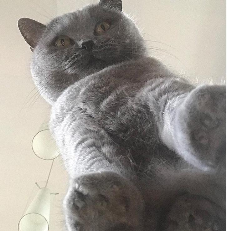 Dovezi ca pisicile sunt adorabile din orice unghi le-am privi - Poza 4