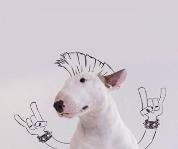 Bull Terrierul Jimmy Choo, intr-un pictorial trasnit