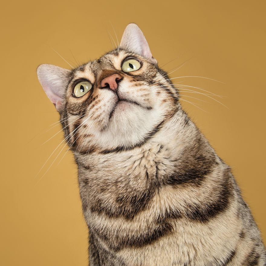 Cele mai frumoase pisici, intr-un pictorial atipic - Poza 12
