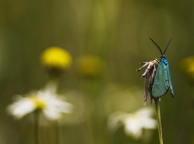 Natura la control, in 40 de poze - Poza 21