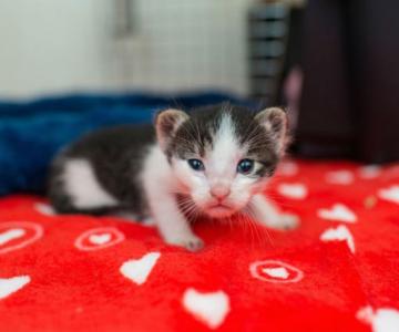 Cei mai simpatici pui de pisica, in cautare de stapan