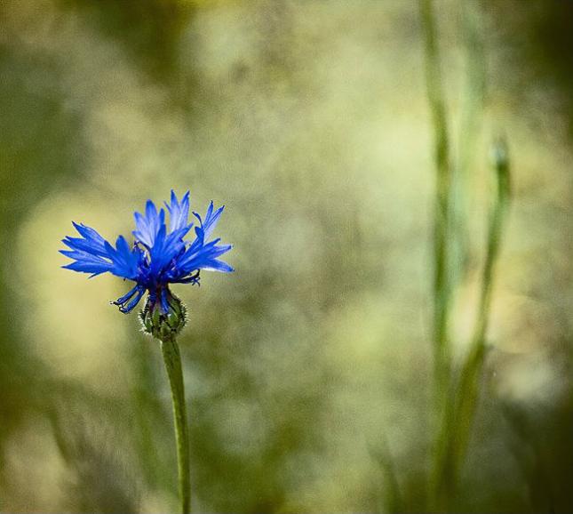 Natura la control, in 40 de poze - Poza 10