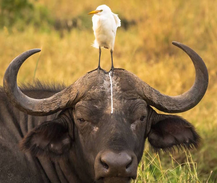 Premiile Comedy Wildlife: Poze amuzante cu animale salbatice - Poza 5
