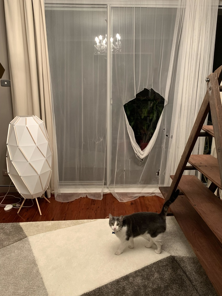 Pisici puse pe rele, in poze haioase - Poza 16