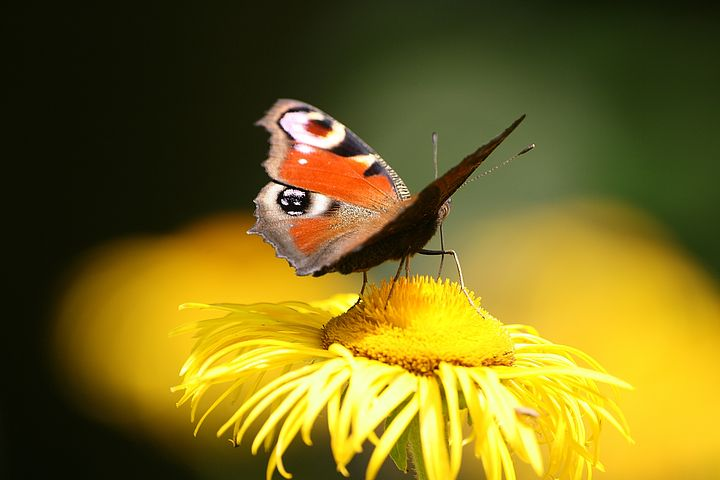 Cei mai frumosi fluturi din lume, in poze spectaculoase - Poza 4
