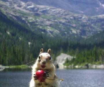 20 de poze induiosatoare cu animale
