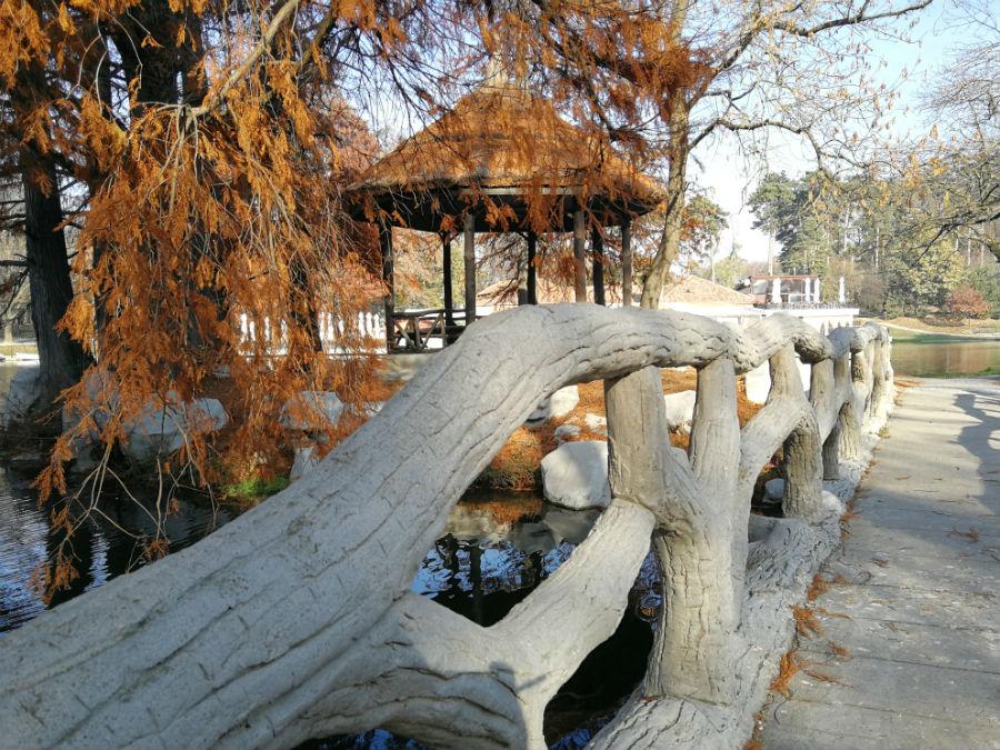 Parcul Nicolae Romanescu: Minunea verde din Banie, in poze superbe - Poza 13