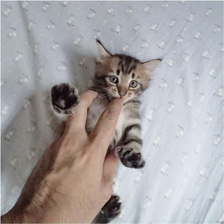 Cele mai frumoase poze cu pisici - Poza 29