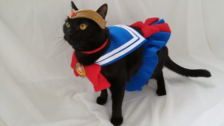 20+ Pisici costumate de Halloween, in poze hilare - Poza 16