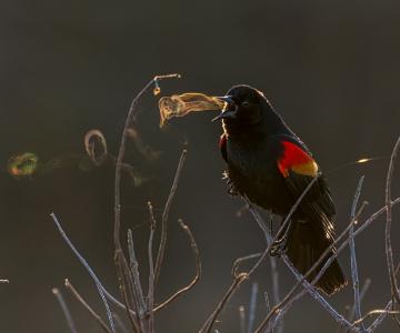 Audubon 2019: Splendoarea pasarilor, in cele mai frumoase fotografii
