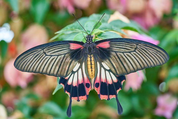 Cei mai frumosi fluturi din lume, in poze spectaculoase - Poza 17