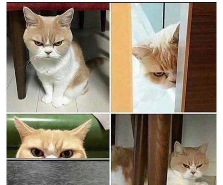 Cele mai expresive animale, in imagini haioase - Poza 1