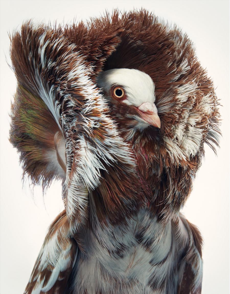 Frumusetea pasarilor rare, in poze fascinante - Poza 8