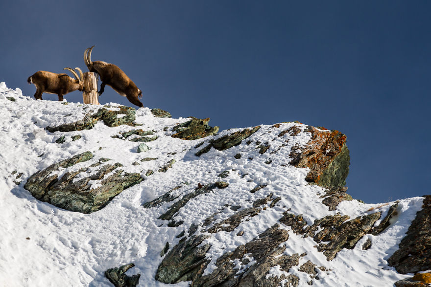 Maretia Alpilor pe timp de iarna - Poza 10