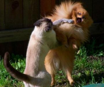 Poze trasnite cu cei mai haiosi caini