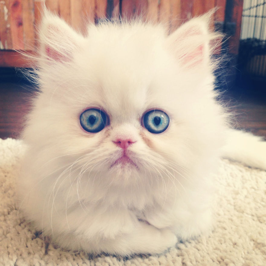 Cele mai frumoase poze cu pisici - Poza 27