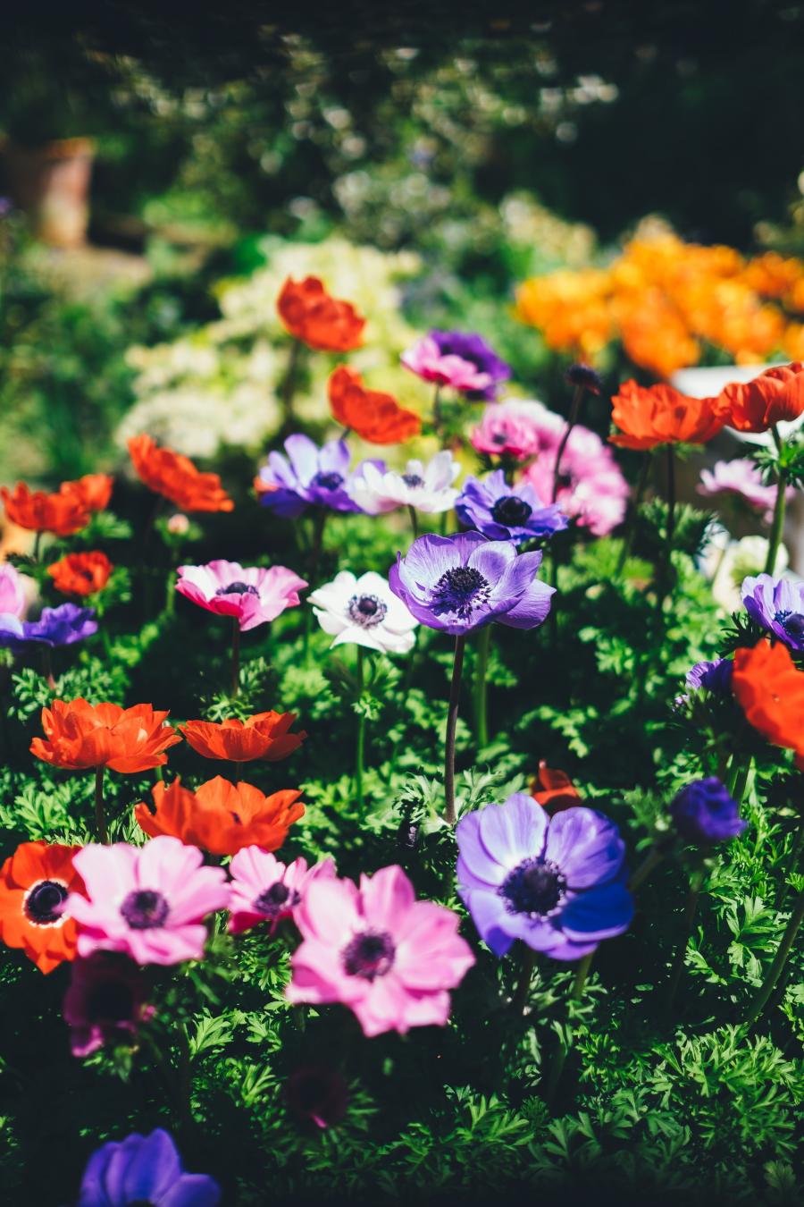Cele mai frumoase flori din lume, intr-un pictorial de exceptie - Poza 2