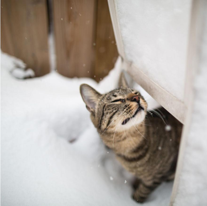 Cele mai frumoase poze cu pisici - Poza 23