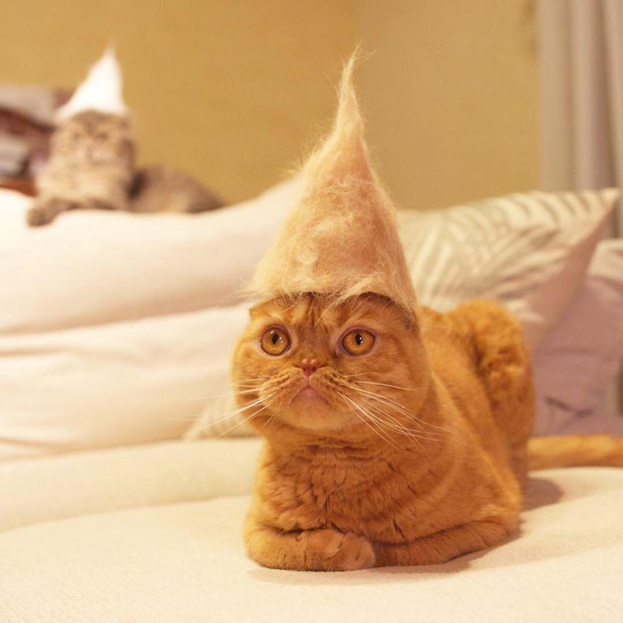Cochete si haioase: Pisici cu palarii blanoase - Poza 11