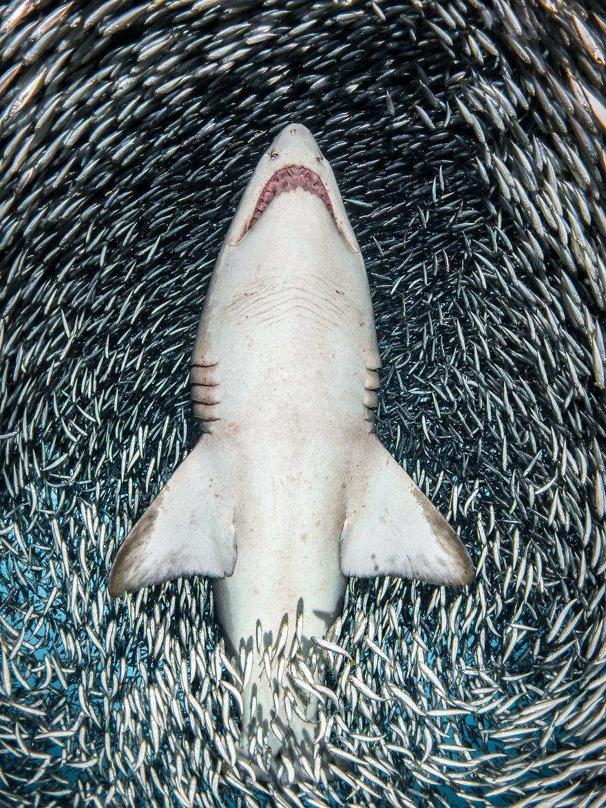 Fotografii superbe din uimitoarea lume subacvatica - Poza 3