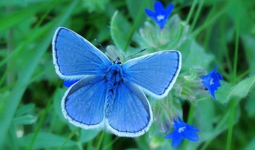 Cei mai frumosi fluturi din lume, in poze spectaculoase - Poza 10
