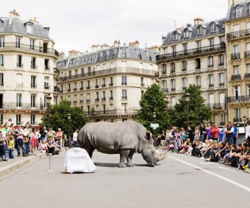 Jungla urbana din fotografiile lui Renaud Marion