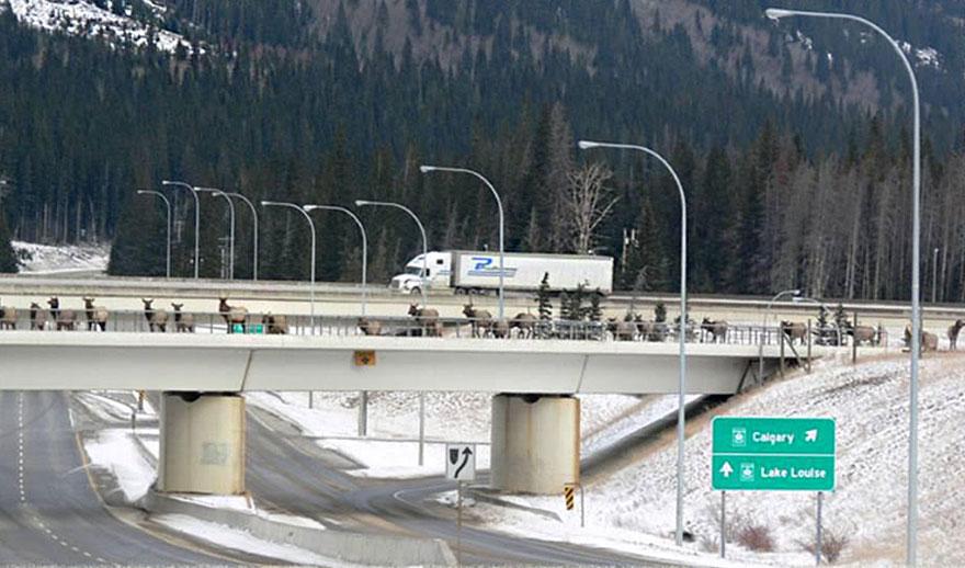Poduri speciale pentru vietuitoarele salbatice - Poza 11