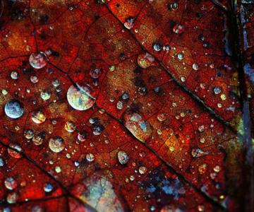 27 de fotografii fermecatoare de Samantha Meglioli